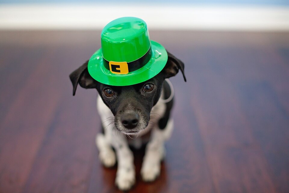 st-patricks-day-puppy